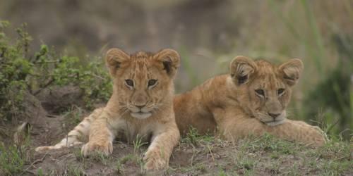肯尼亚野生动物园