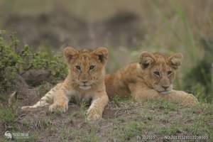 肯尼亚10日游  百兽宴,摄影团 犀牛、大象、斑马、长颈鹿等