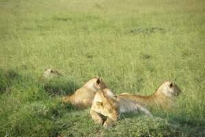 深圳到非洲旅游 非洲肯尼亚坦桑尼亚13天全景之旅