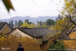 桂林海洋银杏