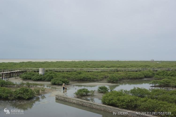 """北海金海湾红树林位于北海市区东南方约15公里处,与素有""""天下第一滩"""""""