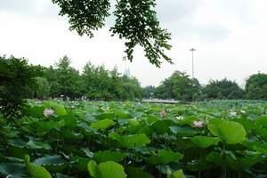 宜昌到洪湖瞿家湾避暑赏荷花红色两日游旅游团 到洪湖看荷花