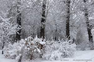 黑河旅游/黑河-遜克-新生-黑河冬季攝影三日品質游