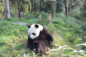 大熊猫基地乐山一日游_成都周边商务一日游