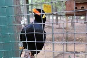 九峰森林动物园