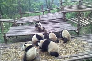 成都熊猫基地三星堆一日游_跟团到熊猫基地三星堆的价格