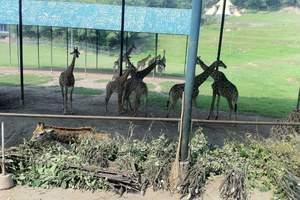 重庆永川野生动物园