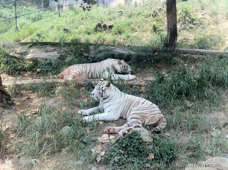 重庆永川野生动物园门票价格