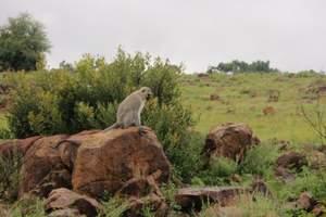 北京去南非参团旅游多少钱报价 迷醉清新 南非花园大道10日