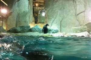 淄博山水旅游坐船去大连、旅顺、金石滩+发现王国双船五日游