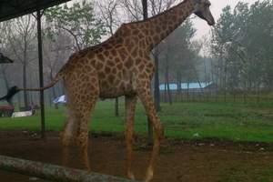 【葫芦岛到秦皇岛野生动物园一日游】葫芦岛到野生动物园旅游
