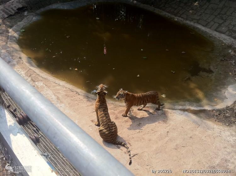 重庆野生动物园