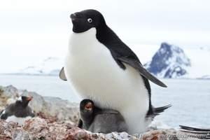 北京到南极旅游:南极17年11月12日前进号-企鹅王国18天