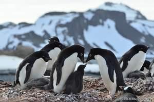 北京出发到南极半岛旅游团报价 南极半岛经典探险航程14日