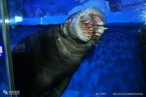 蓬莱旅游必去景点 烟台出发到蓬莱海底世界+长岛大巴两日游