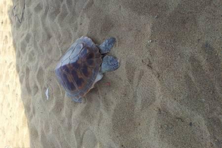 泰安出发到日照金沙滩、灯塔风景区特惠二日游 日照海边看日出