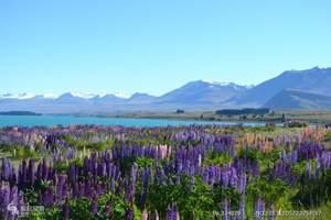 去新西兰旅游—【经典系列】品质新西兰南北岛8天经典之旅