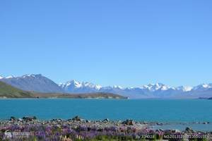 深圳去新西兰旅游 新西兰8天岛屿湾炫动之旅(岛屿湾跟海豚玩)