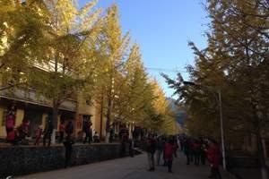 中国银杏之乡,韶关南雄帽子峰银杏、西约都坡罗坑水库2天摄影团