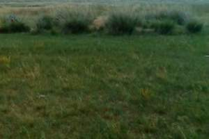 避暑胜地:呼和浩特周边内蒙古希拉穆仁草原、库布其沙漠二日游