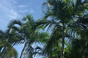 泰国旅游:呼和浩特包机直飞泰国普吉岛+斯米兰八日游 包机