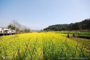 杭州出发婺源、三清山3日游(赏花、游山)