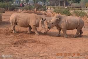 长沙生态动物园(犀牛