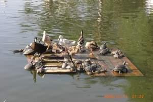 吉林松花湖、长白山天池、哈尔滨卧动八日游<北京出发、品质团>