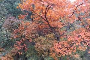 沧州到香山旅游特价团_北京香山赏红叶汽车一日游