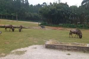 长隆水上乐园、国际大马戏、野生动物世界3日游_广州长隆旅游