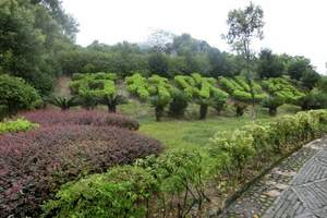 贺州玉石林