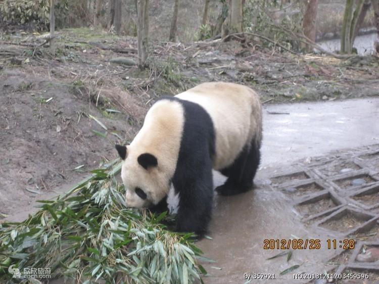 雅安碧峰峡风景区(含熊猫园)一日游