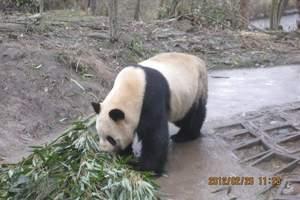 【雅安碧峰峡旅游】成都到碧峰峡(动+景)、上里古镇二日游