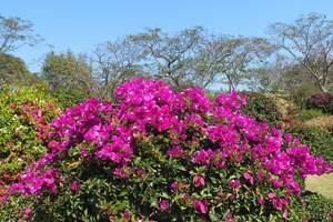 青岛周边公司独立成团推荐行程,大珠山爬山赏花摘草莓一日游