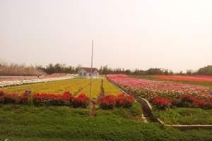 深圳出发番禺长隆欢乐世界、国际大马戏、百万葵园两天休闲游