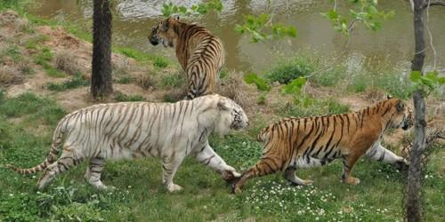 神雕山野生动物园