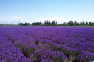淄博暑假到新疆天山天池、吐鲁番、伊犁、那拉提草原双飞八日游