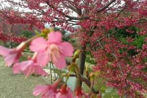 新丰樱花峪