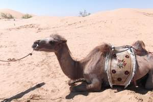 到草原沙漠4日游|去内蒙古旅游|到呼市旅游