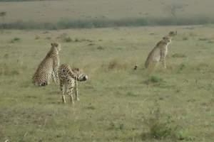 <广州到肯尼亚十日动物大迁徙摄影游>含肯尼亚四大国家公园