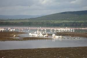 西安到肯尼亚坦桑尼亚旅游安排 肯尼亚坦桑尼亚12日猎奇之旅