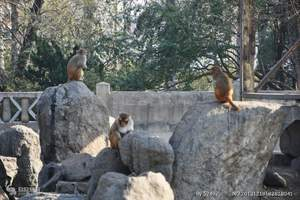聊城到济南跑马岭野生动物园一日游(章丘新园)