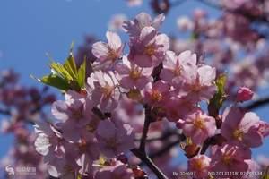 长春去日本旅游 日本全景豪华双温泉美食6日游 日本旅游