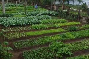 厦门集美宝生园一日游-农家乐成人团线路-厦门周边旅游线路