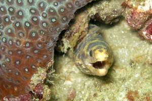 大洋海底世界