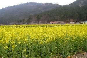 武汉出发到木兰胜天农庄观玻璃平台双汽一日游