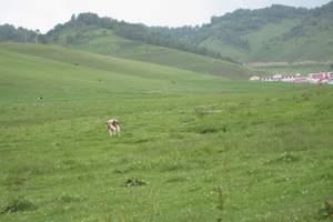 【宝鸡一日游】宝鸡关山草原一日游_关山草原报价_旅游_牧场