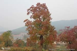 看三峡红叶-赏三峡美景-三峡红叶节往返5日游