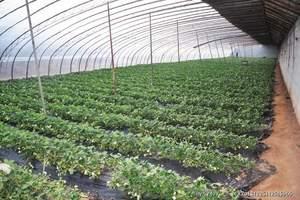 淄博摘草莓一日游-淄博到济南动物园+草莓采摘一日游周六周日发