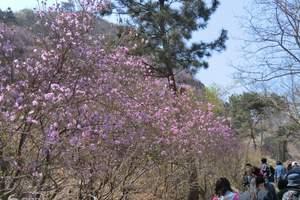 青岛大珠山赏花,青岛红石崖草莓采摘、大珠山赏花一日游